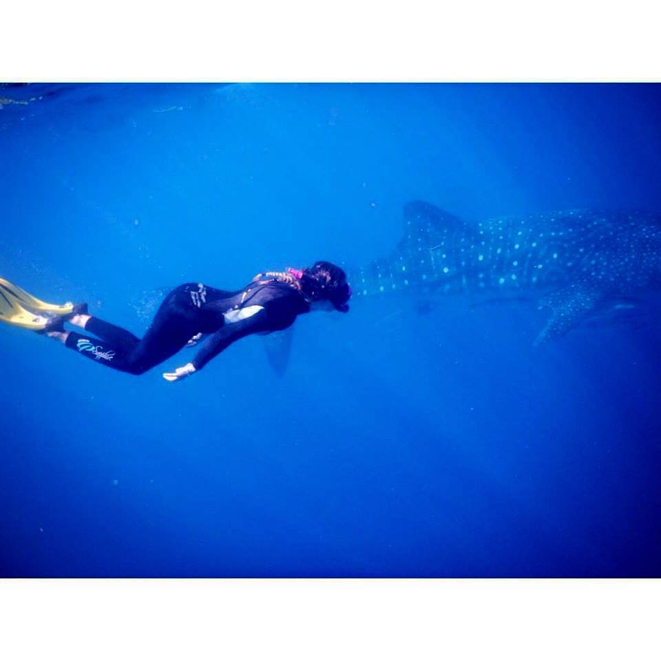 swimming-with-whale-sharks-in-exmouth-the-magic-bus