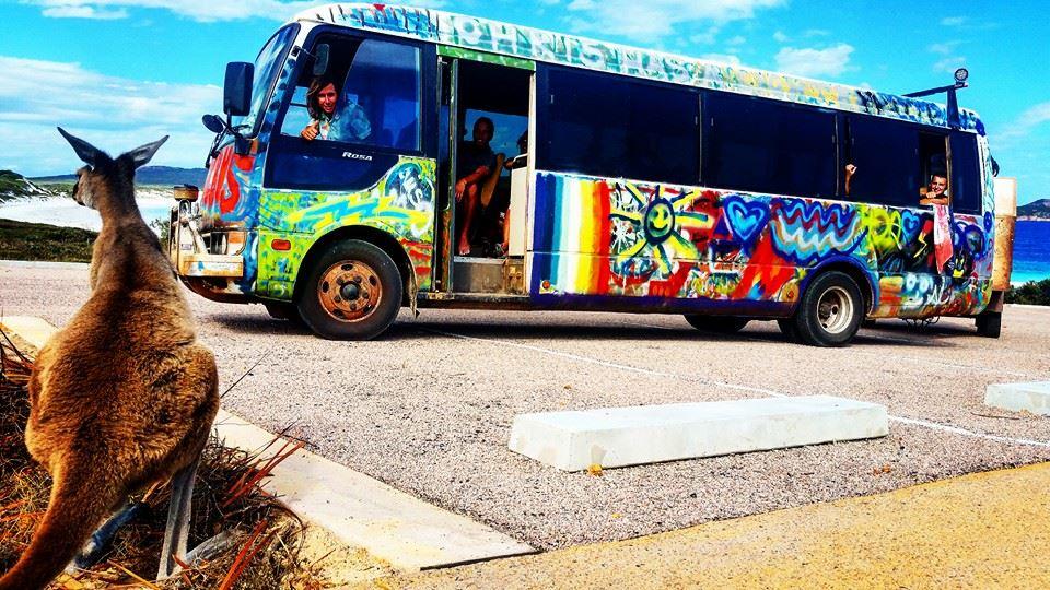 the-magic-bus-kangeroo-australia